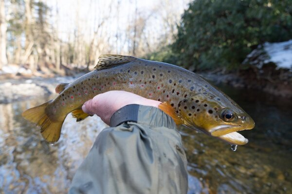 guided fly fishing pocono mountains pennsylvania guided fly fishing new york upper delaware river with filingo fly fishing (1308)
