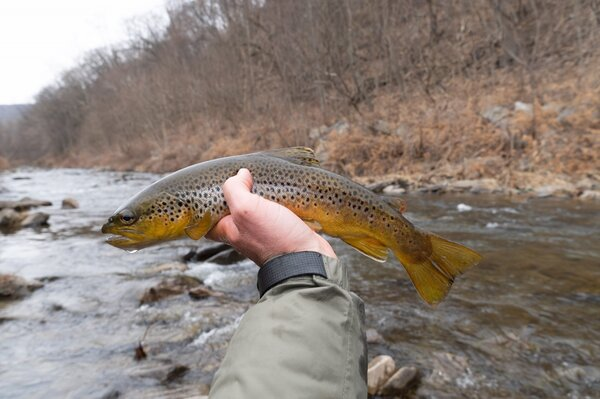 guided fly fishing delaware river new york and guided fly fishing pocono mountains pennsylvania with guide filingo fly fishing (1334)