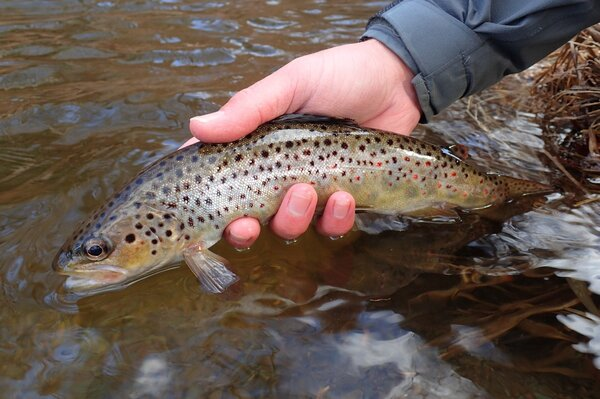 Pocono Mountains fly fishing guide (283)