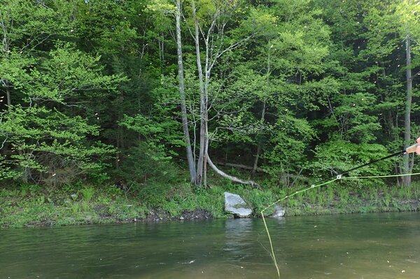 fly fishing the upper delaware river for wild trout on a guided fly fishing tour with jesse filingo (546)