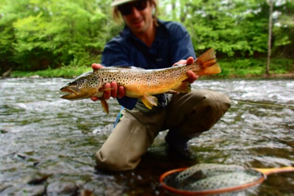 wild brown trout pocono mountains with jesse filingo of filingo fly fishing guided fly fishing (363)