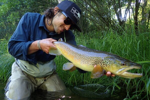 brown trout (168)