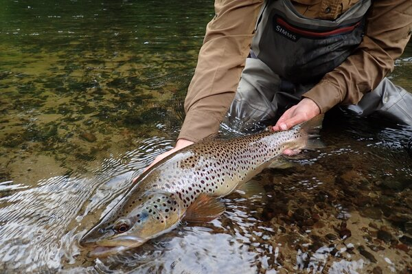 guided fly fishing in the pocono mountains with guide jesse filingo of filingo fly fishing (817)