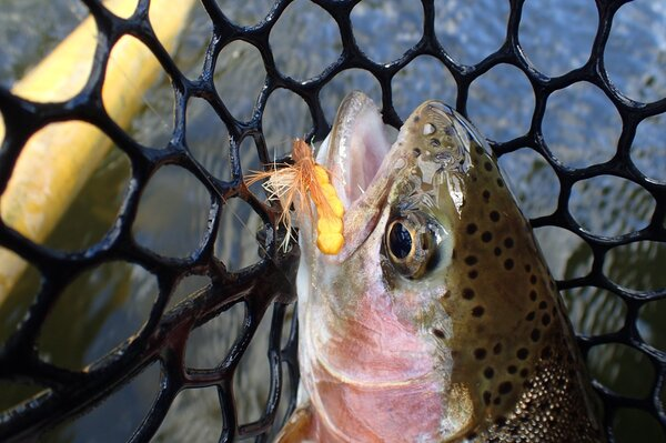 guided fly fishing float trips new york delaware river and pocono mountains pennsylvania guide jesse filingo (1130)