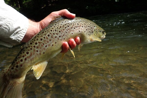 delaware river guided fly fishing (873)