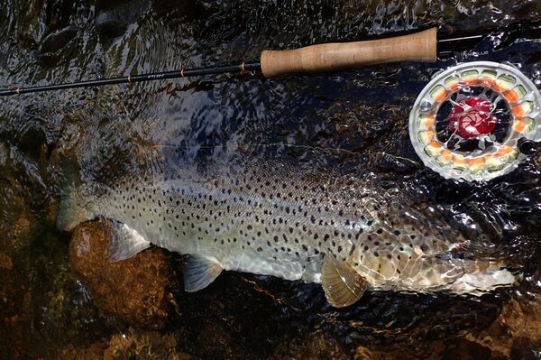 guided fly fishing pocono mountains (874)