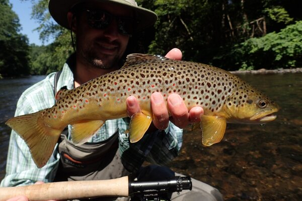 guided fly fishing tours in the pocono mountains with jesse filingo of filingo fly fishing for brown trout (586)