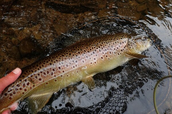 pocono mountains guided fly fishing (884)