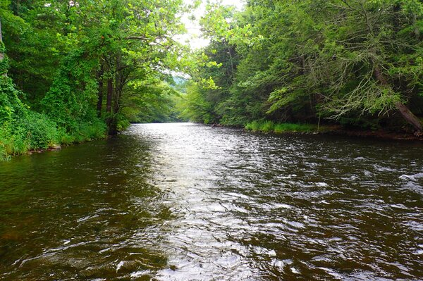 fly fishing the pocono mountains with jesse filingo of filingo fly fishing of a guided fly fishing trip (414)