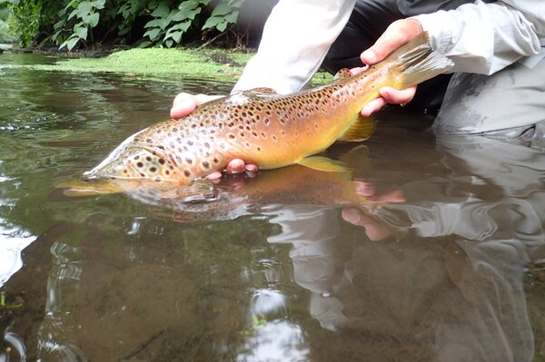 guided fly fishing west branch delaware river new york jesse filingo (1214)