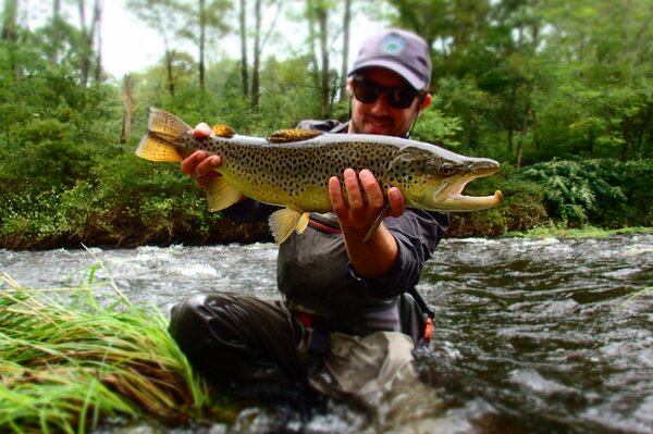 guided fly fishing in the pocono mountains for wild brown trout with filingo fly fishing (611)