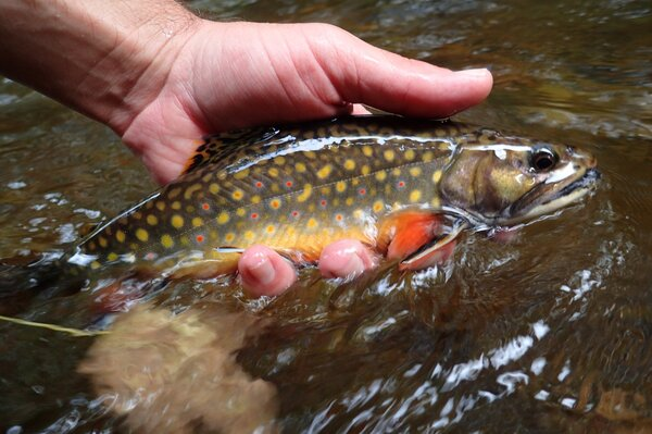 guided fly fishing tours in the pocono mountains with jesse filingo of filingo fly fishing (639)