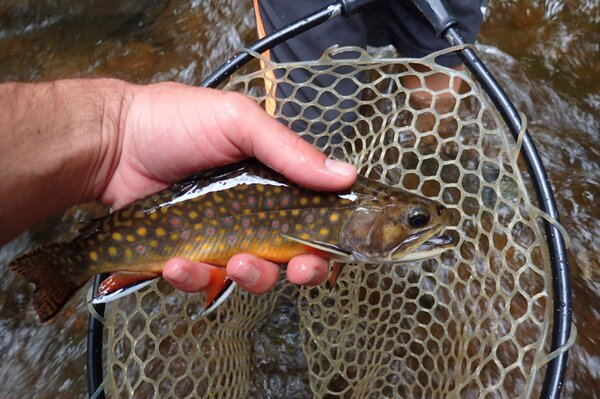 fly fishing tours in the pocono mountains with filingo fly fishing for wild trout (642)