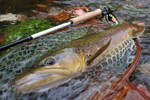 fly fishing for wild brown trout in the pocono mountains with jesse filingo of filingo fly fishing (447)