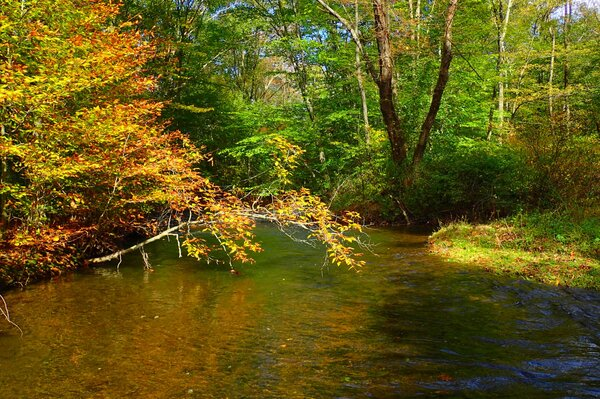 fly fishing the pocono mountains in the fall with jesse filingo of filingo fly fishing for wild trout (655)