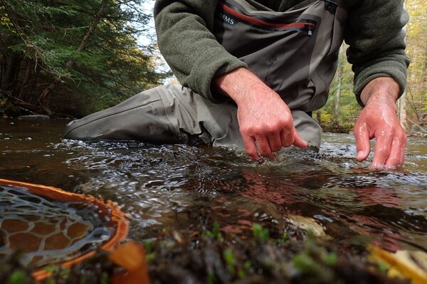 fly fishing the pocono mountains with filingo fly fishing of for wild brown and brook trout (661)