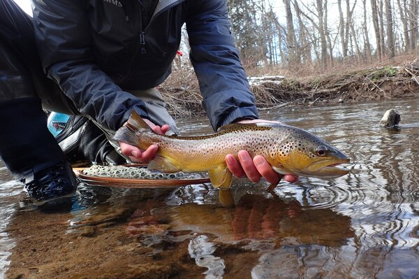 guided fly fishing for wild trout in the pocono mountains and delaware river (679)