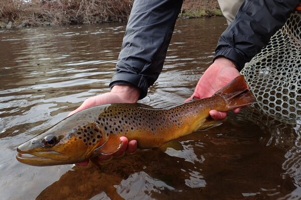 pocono mountains and delaware river fly fishing with jesse filingo of filingo fly fishing (680)