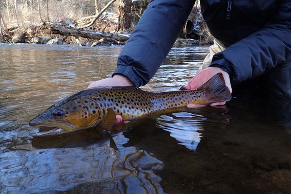 guided fly fishing tours in the pocono mountains with filingo fly fishing (681)