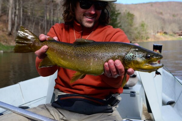 upper delaware river brown trout caugh by jesse filingo of filingo fly fishing on the west branch of the delaware river (340)
