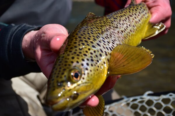 west branch delaware river fly fishing guide (59)