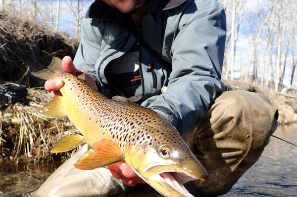delaware river fly fishing guide (86)