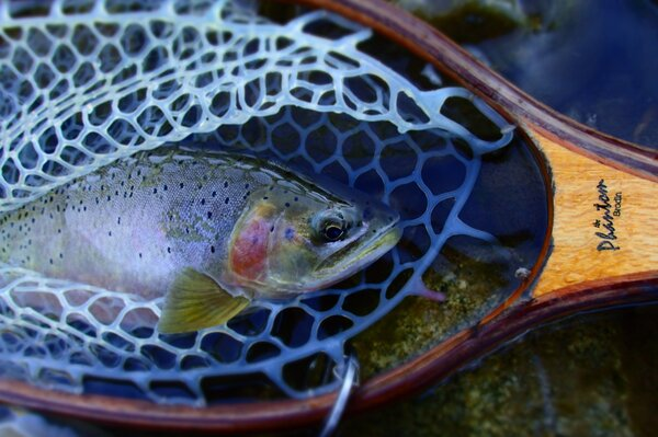 fly fishing in montana with jesse filingo of filingo fly fishing (405)