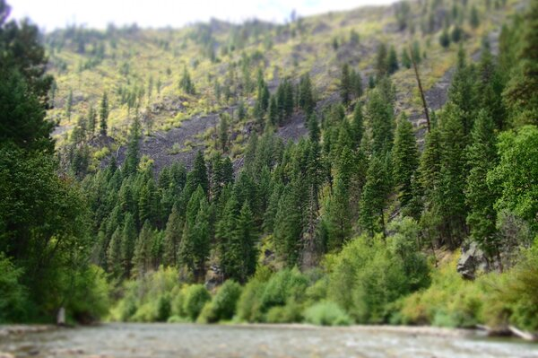 guided fly fishing trips to montana for wild trout with jesse filingo (929)